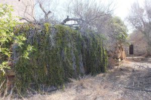 Ditch Parapet Trees